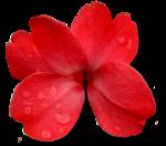 осенние цветы,красные,оранжевые,цветы осени,осенние цветы