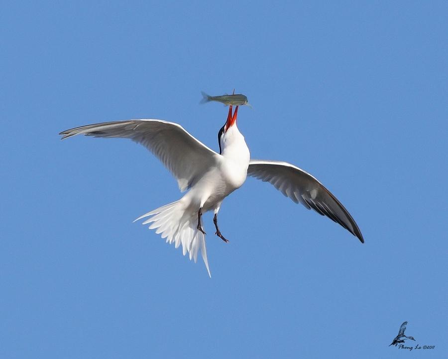 Птицы.Фотограф P Le