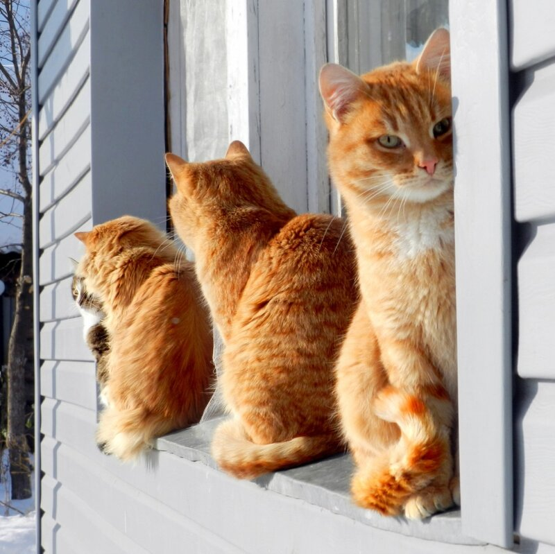 Сидят кошки на окошке