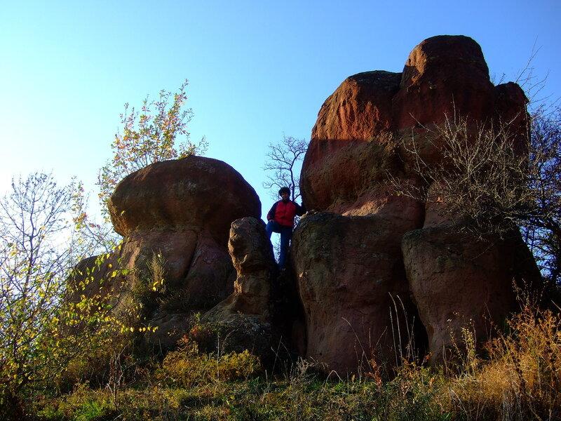 114-У каменных грибов