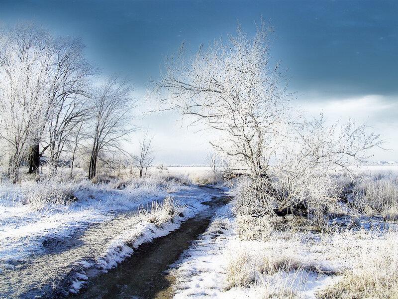 картинки зима декабрь январь нетребовательные растения