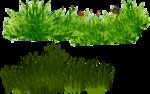 grass (49).png