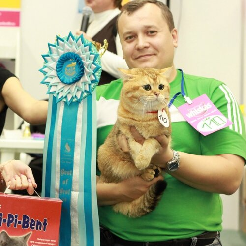 est In Breed, Best Adult of Breed - 110 Shunra Coon's Calvin (M) BRI ny 25 Вл. Мозалевская А. В.,