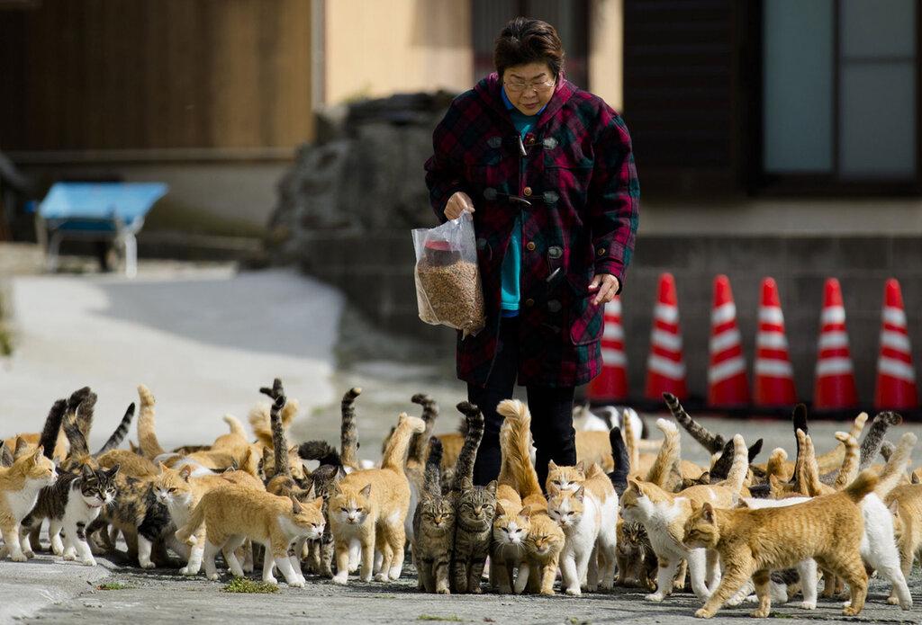 Aoshima, aka 'Cat Island'_1280.jpg