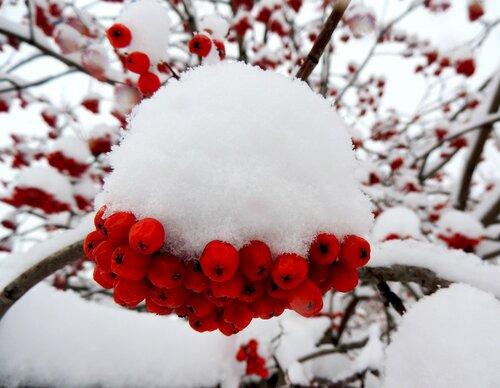 В белой шапке декабря