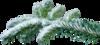 Еловые,сосновые ветки
