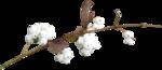 ial_fis_berries1.png
