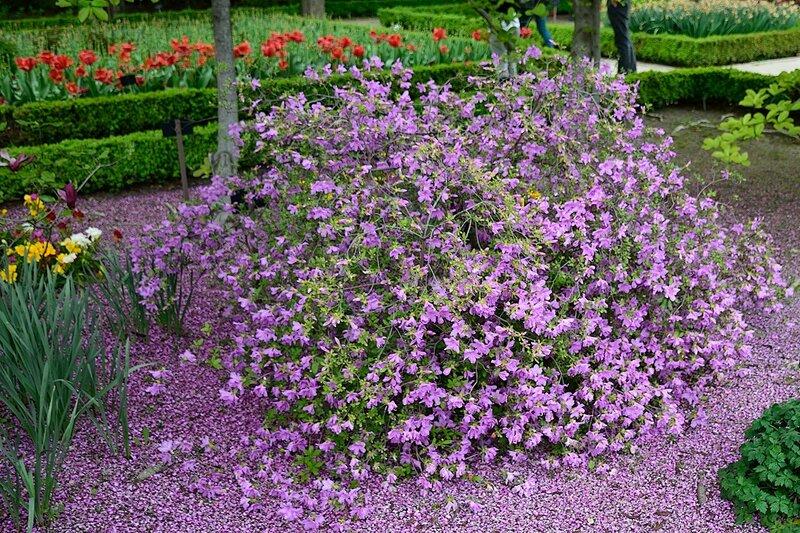 Мадрид - Ботанический сад