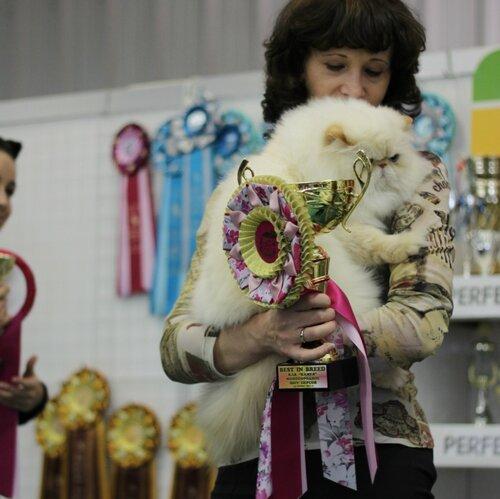 Best In Breed, Best Adult of Breed - 7 EOL Zeon (M) PER d 33 Вл. Жавнерова И.П.,