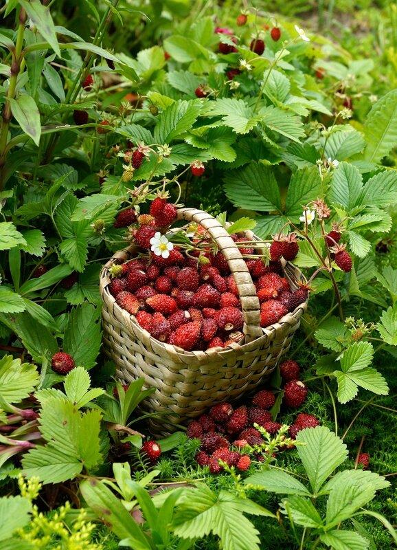 Спелых ягод сладкий аромат!