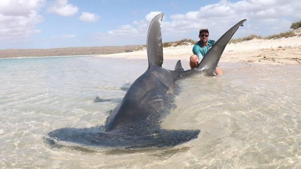 Хорошая рыбалка в Австралии