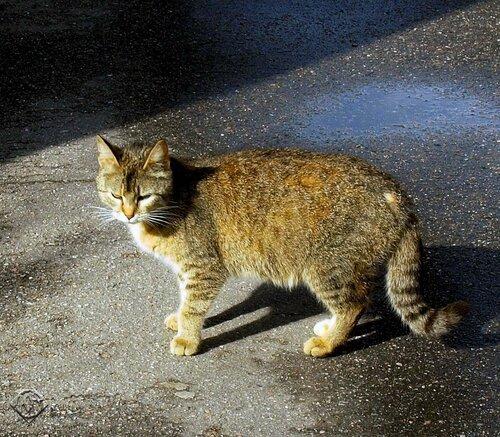Обычная кошка