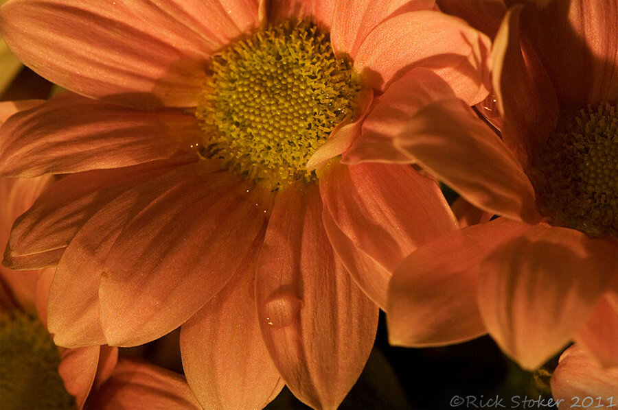 Richard Stoker Photography-4.jpg