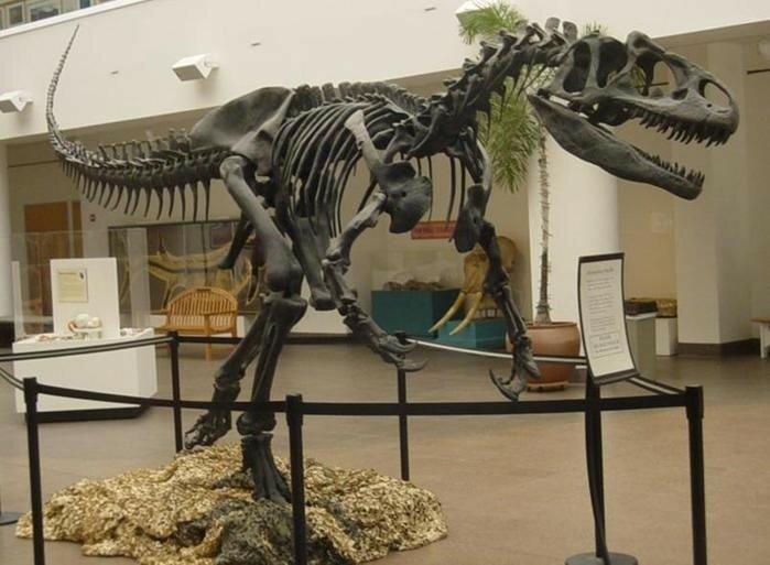 Желающие могут купить скелет аллозавра, который жил 145 155 млн лет назад