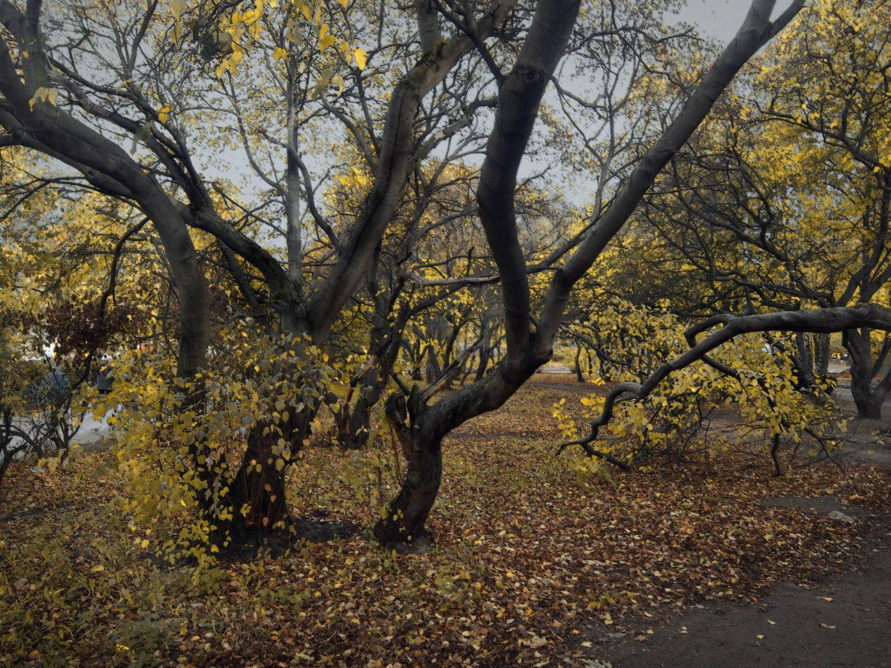 Золотая осень. Автор фото: Юрий Семенов