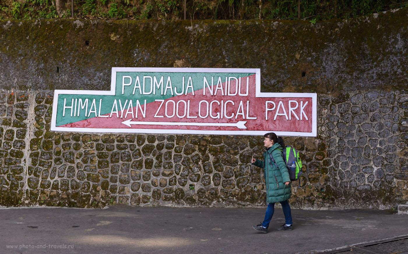 Фотография 7. Официальное название зоопарка в Дарджилинге - Padmaja Naidu Himalayan Zoological Park. 1/640, -1.0, 2.8, 400, 48.