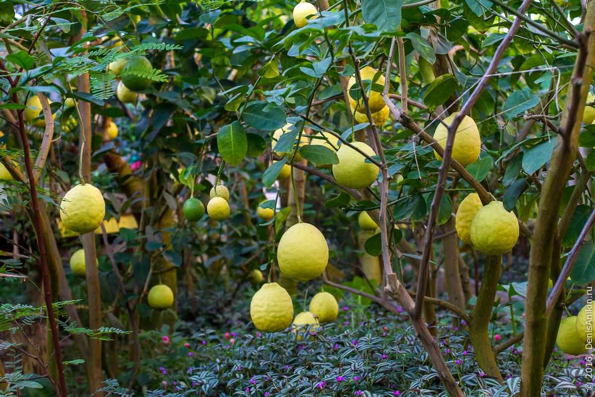 Саратовский лимонарий 21
