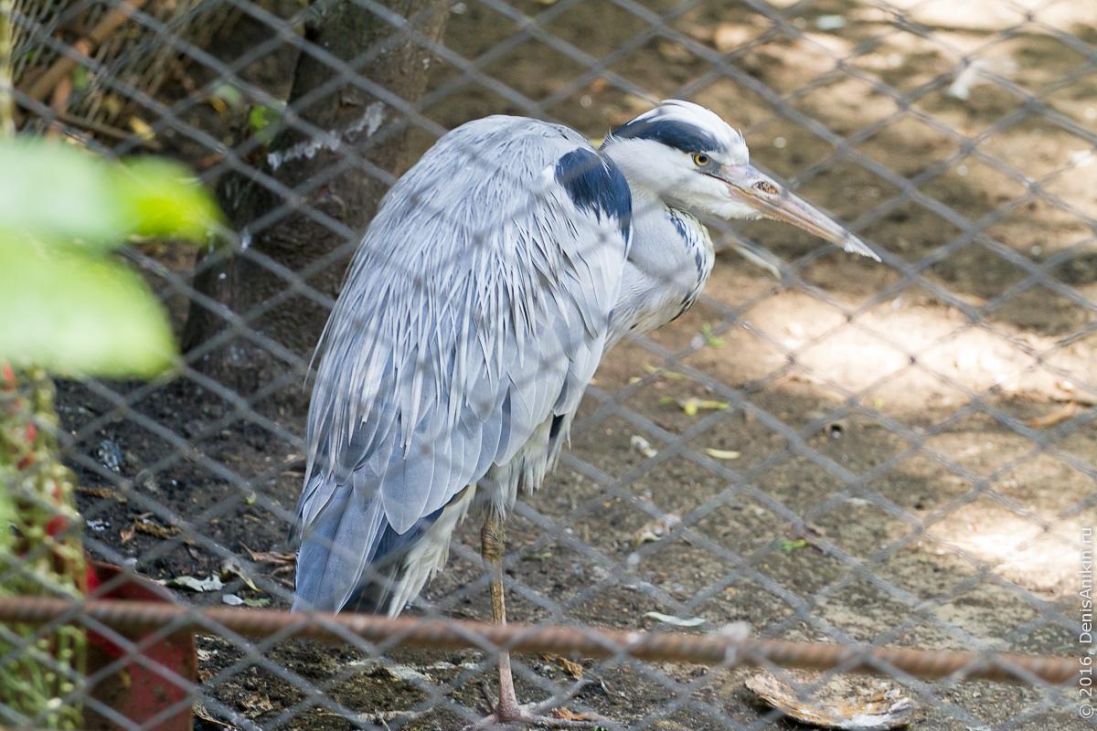 Пензенский зоопарк 8