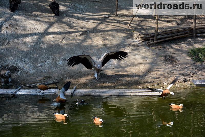 Зоопарк Нейпьидо