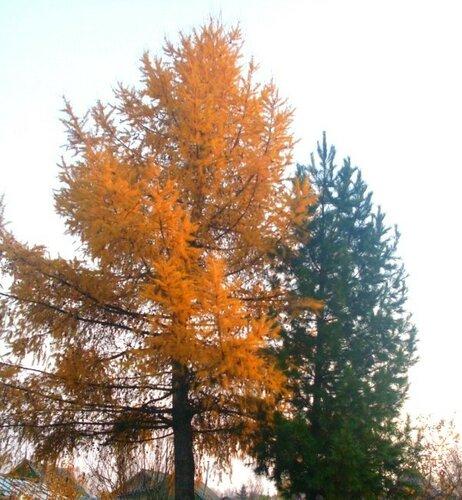 Осенняя красота..