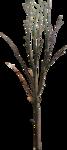 ial_fis_tree1.png