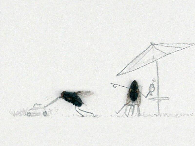 Двойные днем, картинки муха прикольные