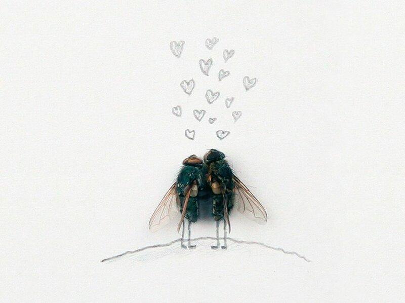 Картинка мухи прикольное, фотобумаге
