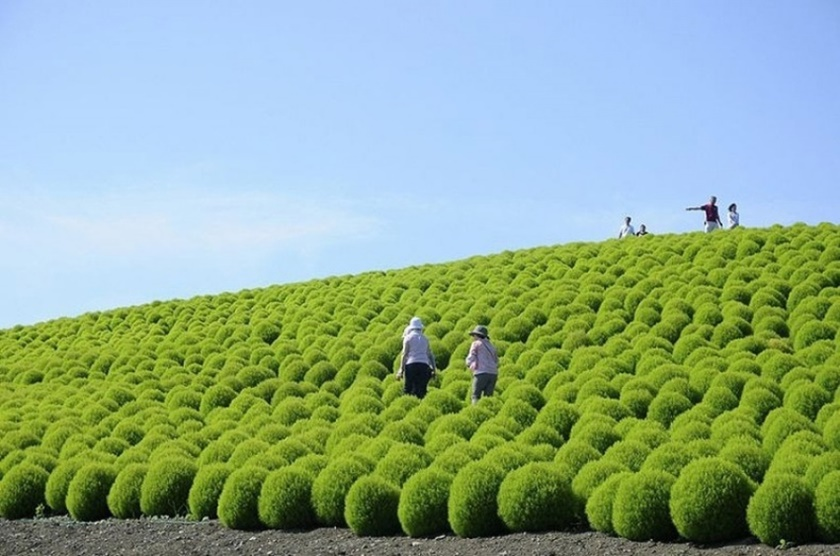 Живописный японский парк Хитати Кайхин 0 1422d6 f9873b4d orig