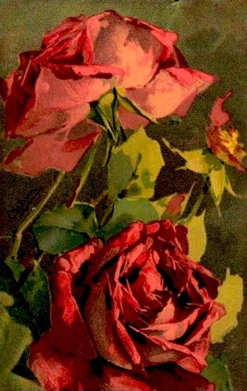 К. Кляйн. Розы.