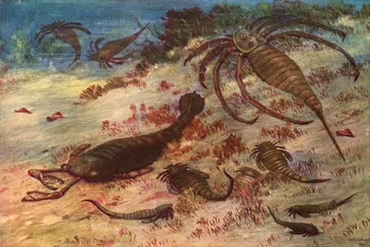 Ученые обнаружили старинного гигантского скорпиона Pentecopterus