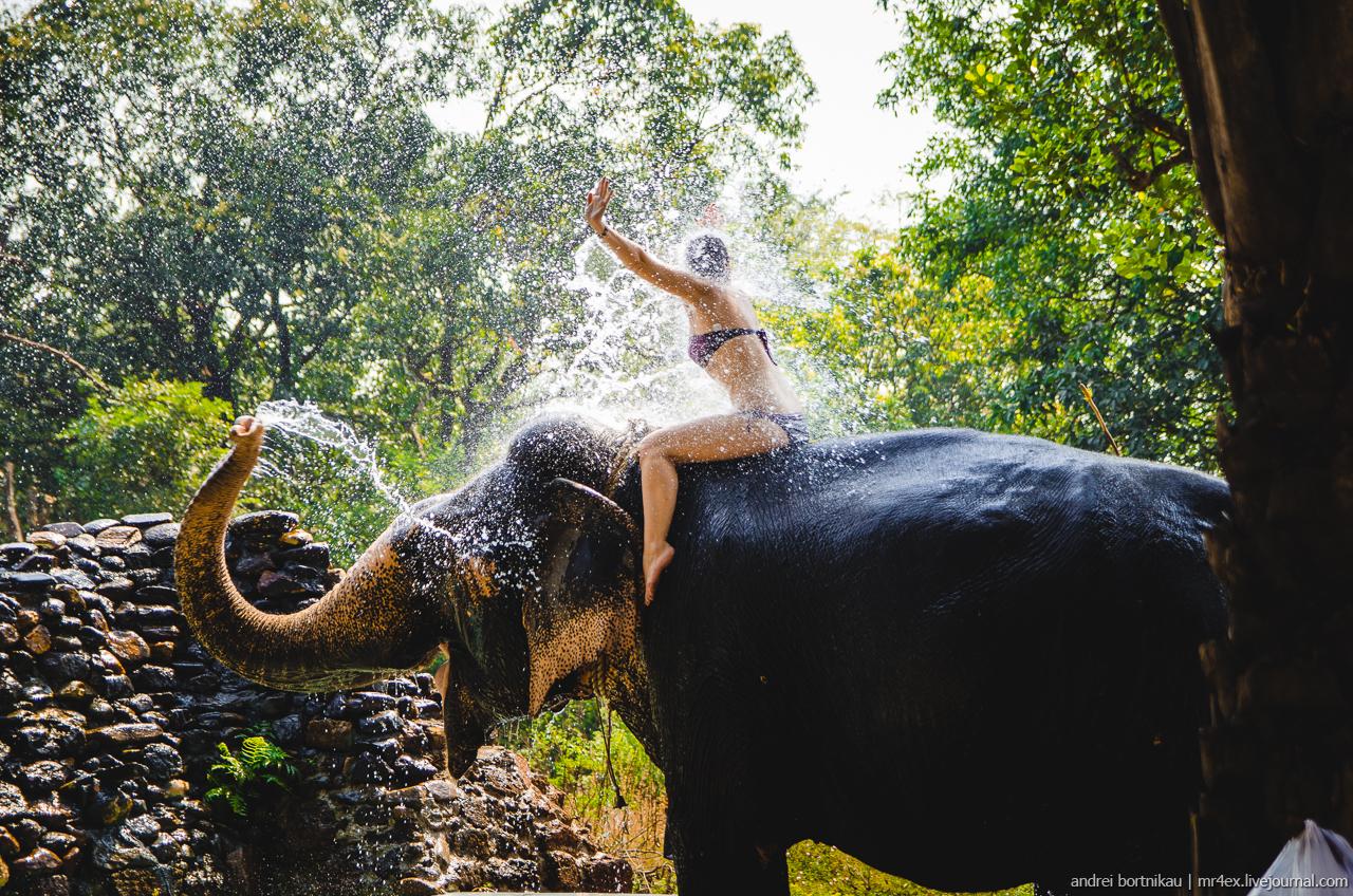 Купание со слоном на плантации специй, Понда, Гоа
