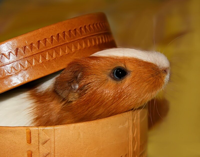 Как свинки пошли купить ботинки новицкая