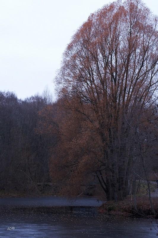 Ботанический сад 2011-11-13