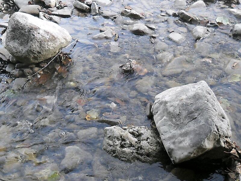 Окрестности Горячего Ключа, лес, 8 октября 2011
