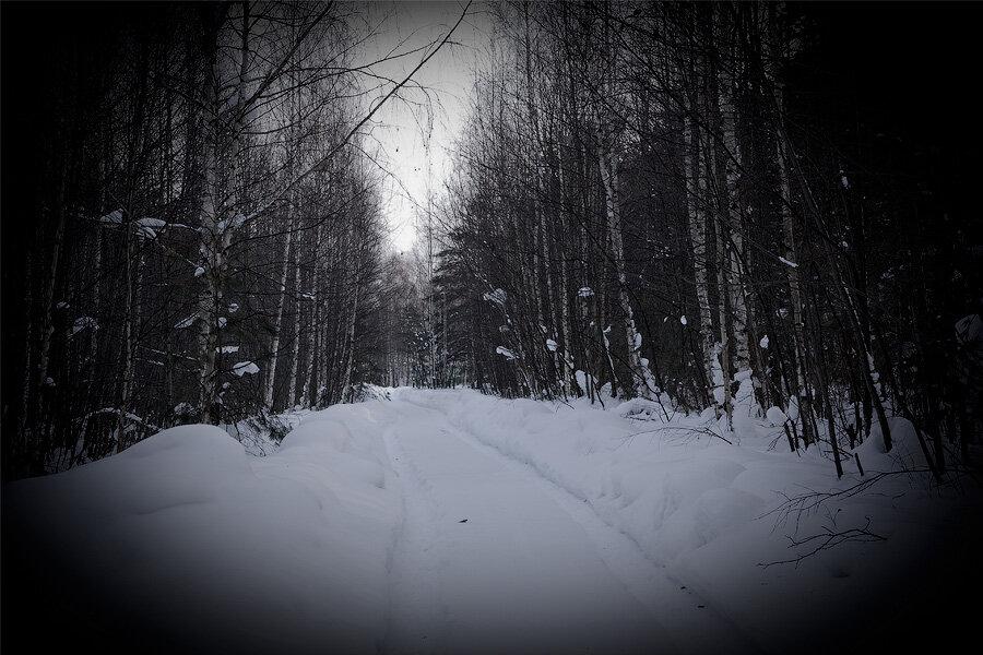 Дорога в лесу к пароходу