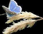Maxyran_02_03_11_Butterfly.png