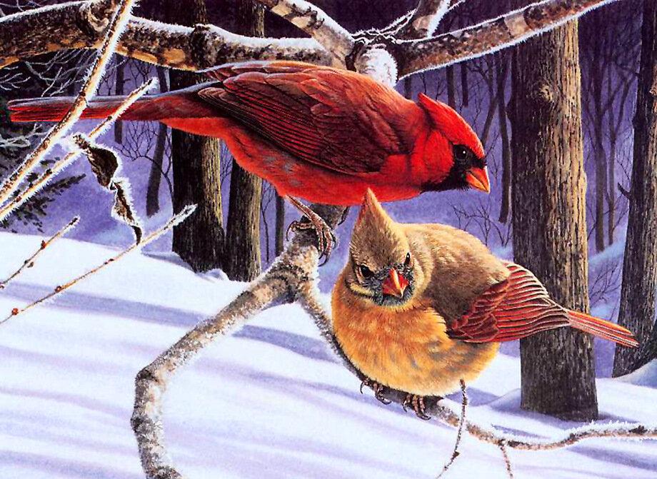 Картинки про, картинки животные и птицы зимой