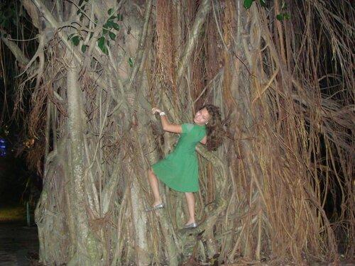 Заросшее корнями дерево