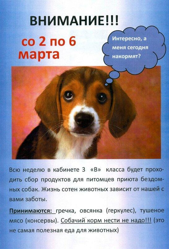 акция для приюта бездомных собак.jpg