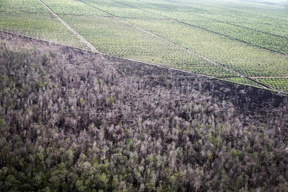 3. Чтобы уничтожить леса, их просто поджигают. Это Индонезия. (Фото Bagus Indahono):