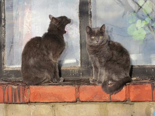 Кошачья серенада