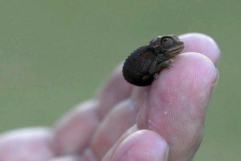 Самые маленькие животные в мире