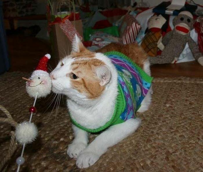 Подготовка котов к Новому Году