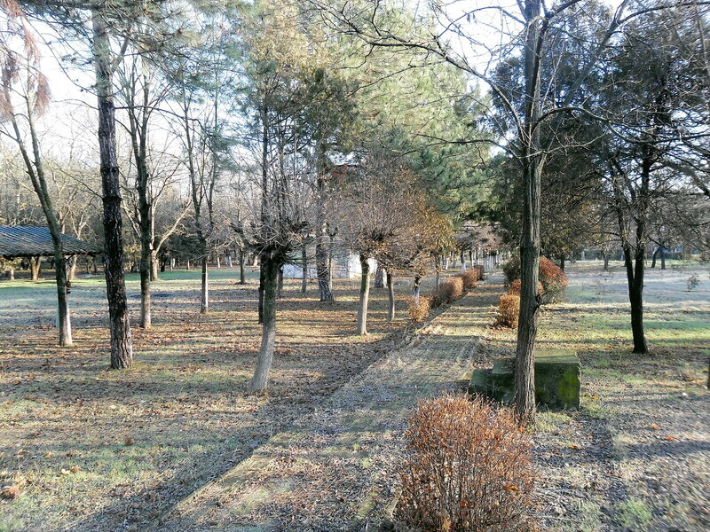 Утро солнечное, декабрь 2011