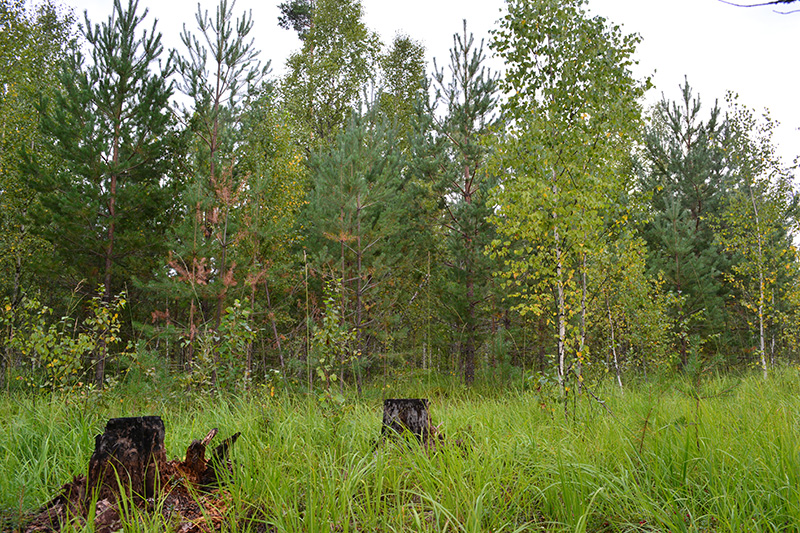 леса 7.jpg