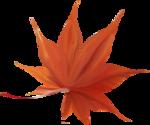 florju_autumnontheway_elmt (8).png
