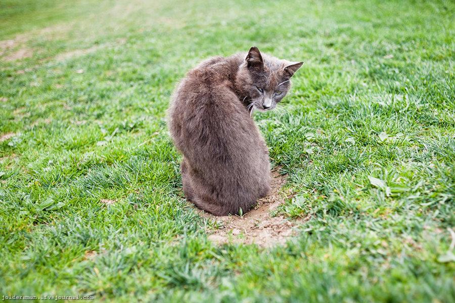 один из немкогих котов в карпатах