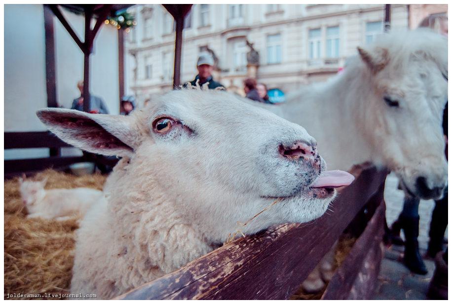 улыбка новогодней овечки в Праге