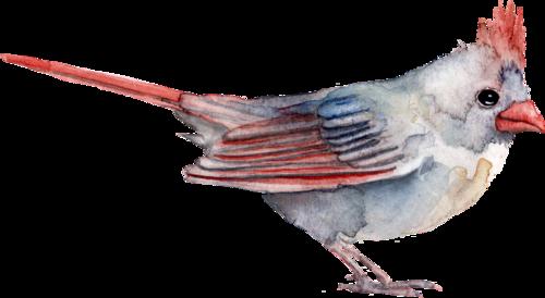 CreatewingsDesigns_FF_Shot_Bird.png