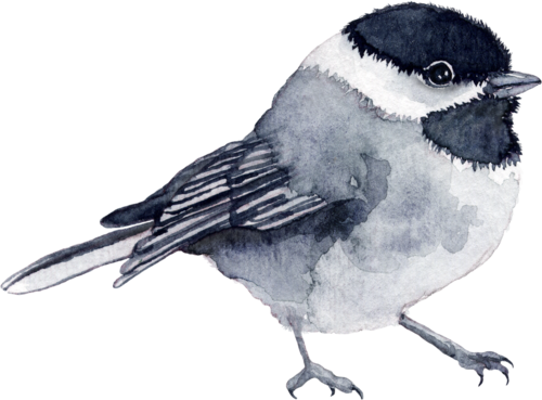 CreatewingsDesigns_FF_Bird1.png